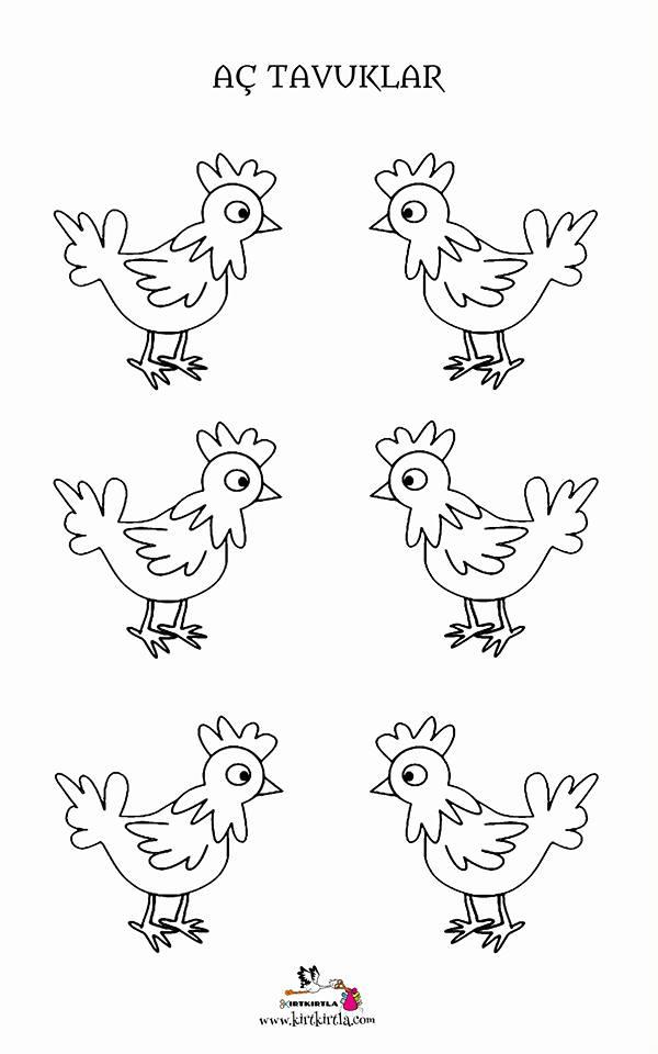 Ac Tavuklar Kalip Boyama Sayfasi Okul öncesi Boyama Sayfası