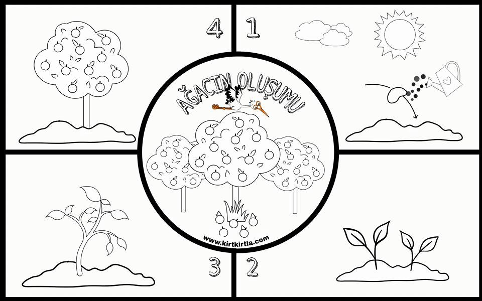 Ağacın Oluşumu Ağacın Oluşumu Okul öncesi Boyama Sayfası