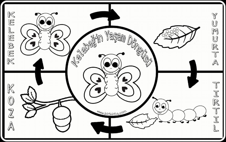 Kelebeğin Yaşam Döngüsü 4 Aşamada Muhteşem Doğa Olayı