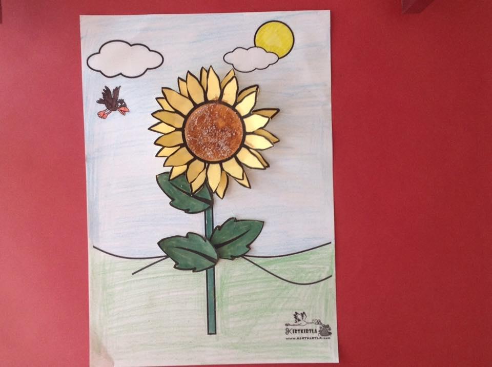 okul öncesi sanat etkinliği ayçiçeği makas çalışmaları kesme KIRTKIRTLA 6 - AYÇİÇEĞİ SANAT ETKİNLİĞİ