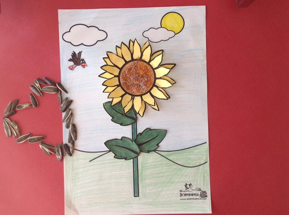 okul öncesi sanat etkinliği ayçiçeği makas çalışmaları kesme KIRTKIRTLA 7 - AYÇİÇEĞİ SANAT ETKİNLİĞİ
