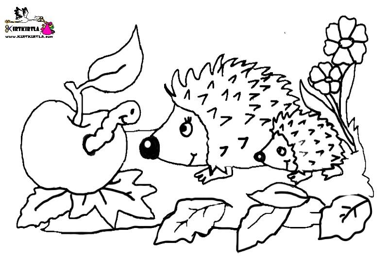 kirpi boyama sayfası