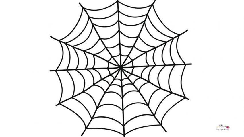 örümcek Aği Kalip Okul öncesi Kirtkirtla