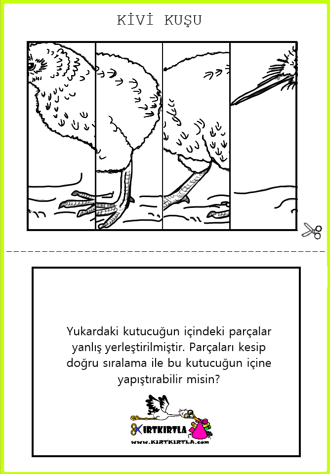 Kivi Kuşu Puzzle Kirtkirtla Kivi Kuşu Doğru Sıralama