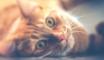 13 Facts For Cat Lovers Or Why The Internet Loves Cats