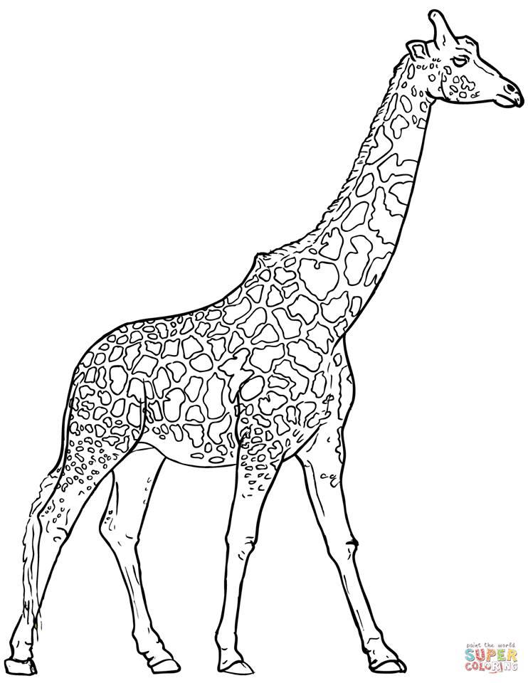 Zürafa Boyama Sayfasi 12 Kirtkirtla