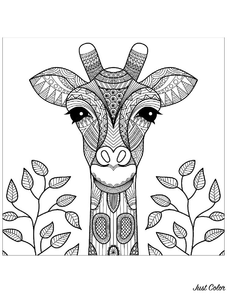 Zürafa Boyama Sayfasi 13 Kirtkirtla